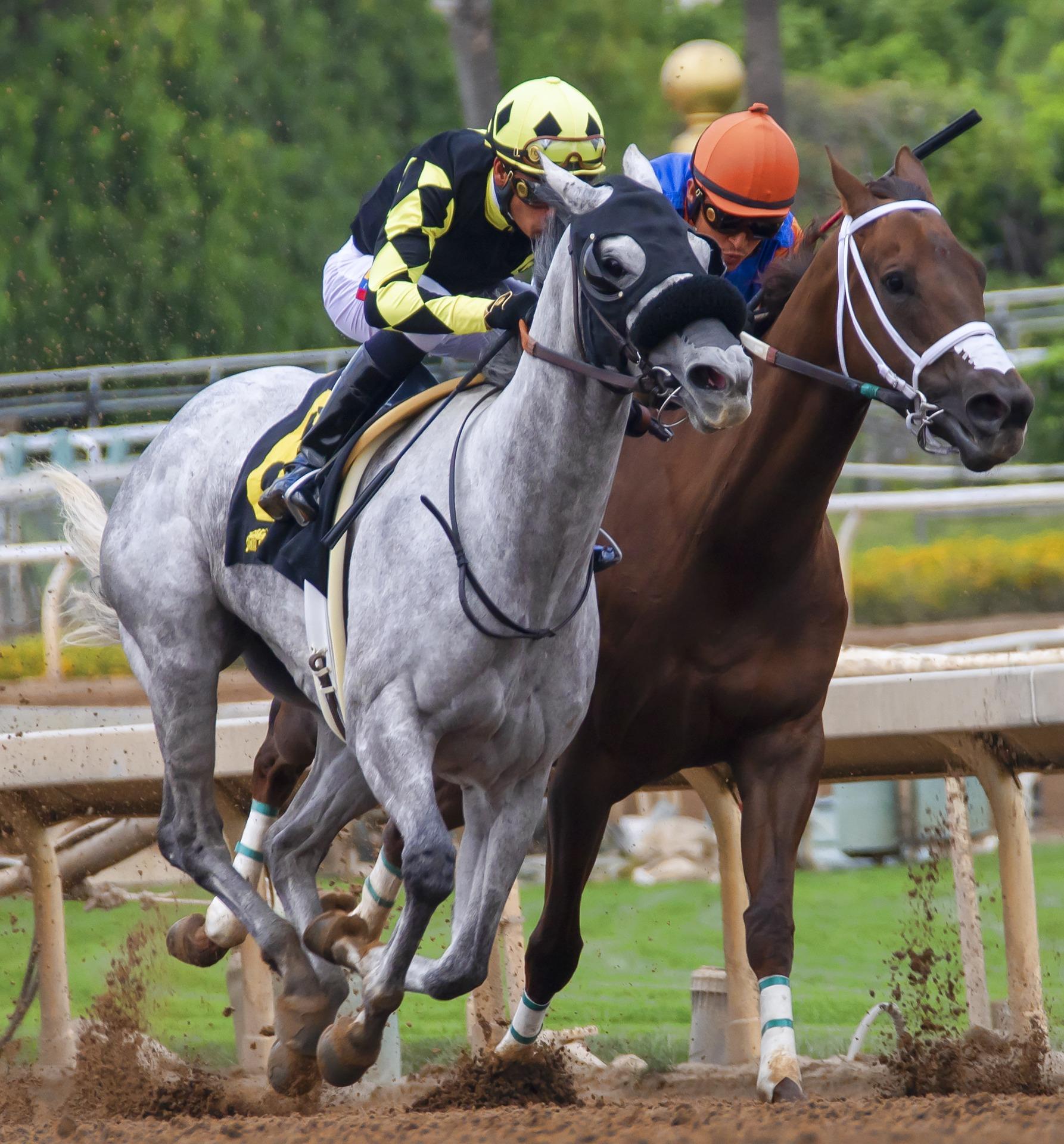 horses 3817727 1920